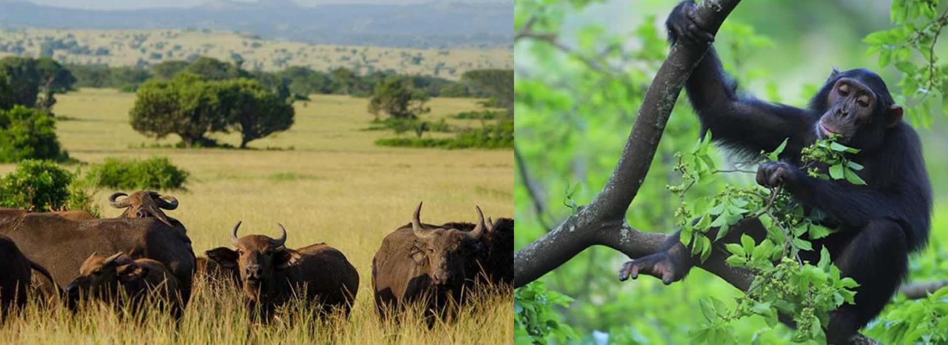 4 Days Wildlife and Primate Safari Uganda